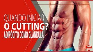 Quando iniciar o cutting? - Adipócito como glândula endócrina