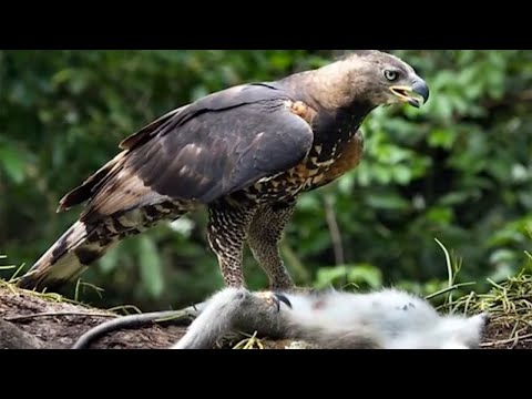15 Most Dangerous Birds on the Planet!