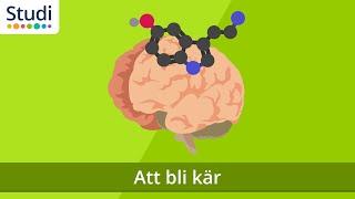 Att Bli Kär (Biologi) - Studi.se