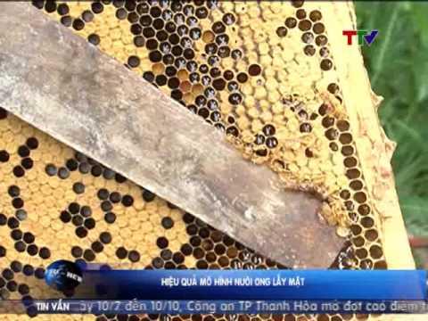 Hiệu quả mô hình nuôi ong lấy mật