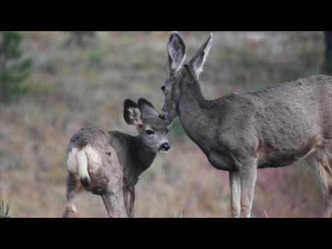 Mammals & Biomes of the Sonoran Desert