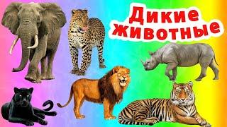 Учим диких животных для детей.Звуки диких животных.Виды Африканских животных.МУЛЬТИК про животных.