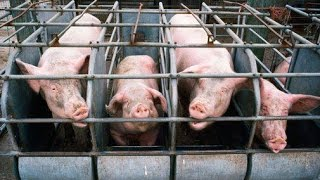 EATING FEAR - Must Watch Film! - Farm to Fridge - The Truth About Meat Production