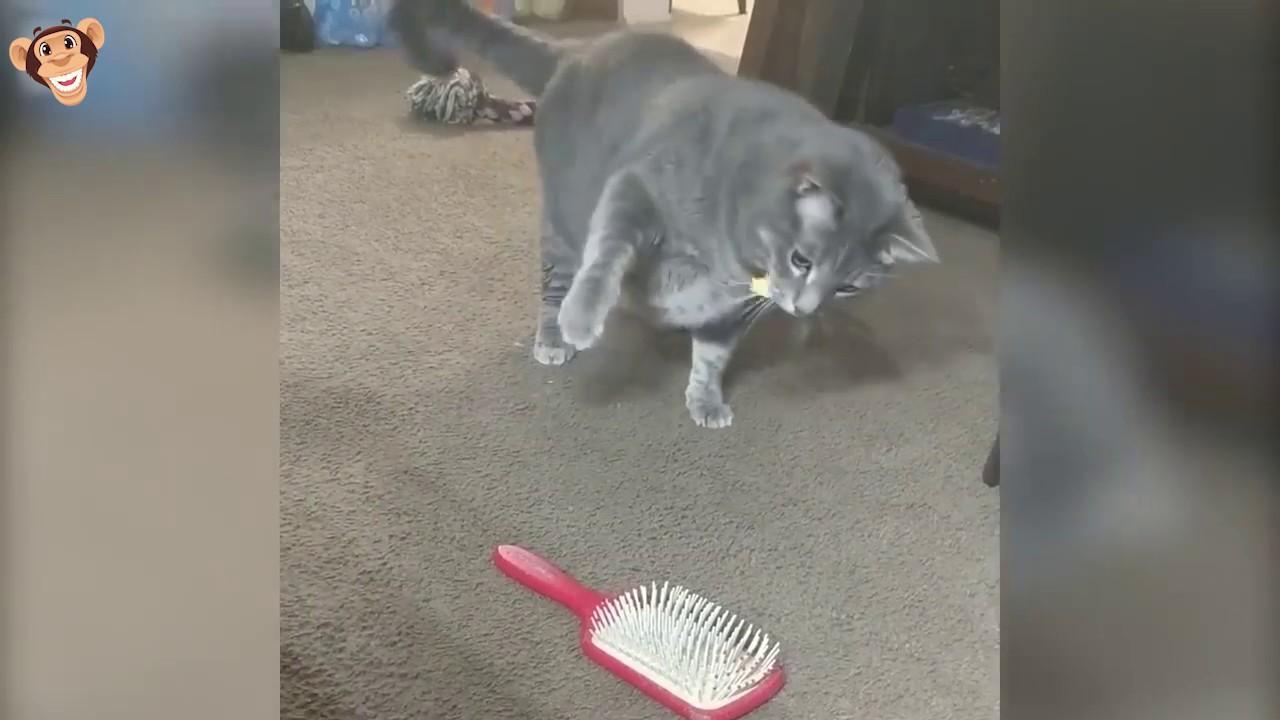 Смешные коты с озвучкой #1