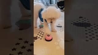 간식 주문하는 강아지 (간식벨)