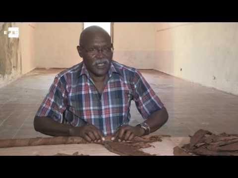 """""""Cueto"""", el tabaquero cubano que va por su sexto Guinness con un habano gigante"""