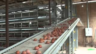 Hellmann Poultry cage in Nigeria