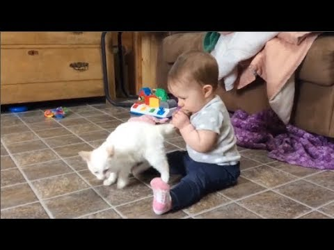 Funny Cats Annoying Babies and Babies Annoying Cats - Youtube