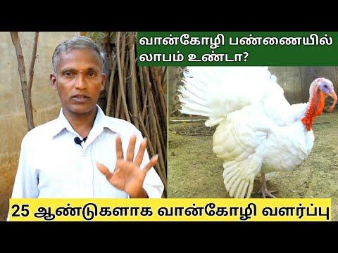 வான்கோழி வளர்ப்பு பற்றி அறிய தகவல் | Turkey bird in tamilnadu