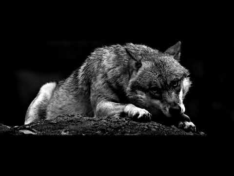 Wolves - My Time [1H]
