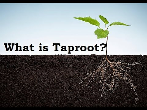 What is Taproot?