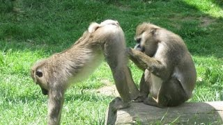 Super funny animal 2017/Vidéo Animaux drôles