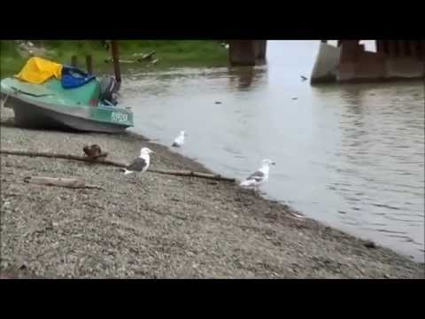 свинг знакомства Камское Устье
