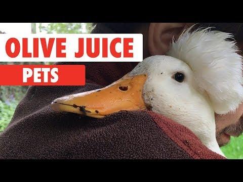 Olive Juice Pets