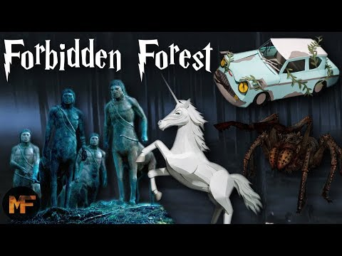 Everything You Need to Know About the Forbidden Forest (History Of)