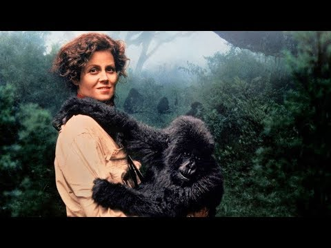 Gorillas In the Mist Great Movies That May Have Been Forgotten Part 4