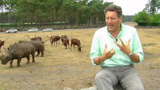 SerengetiPark  Big Five quot;Das Nashornquot;