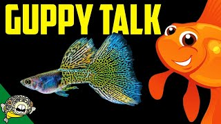 Lets talk Guppies. Fancy Guppy lovers unite! Live Stream
