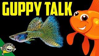 Lets talk Guppies. Fancy Guppy lovers unite! Live Stream