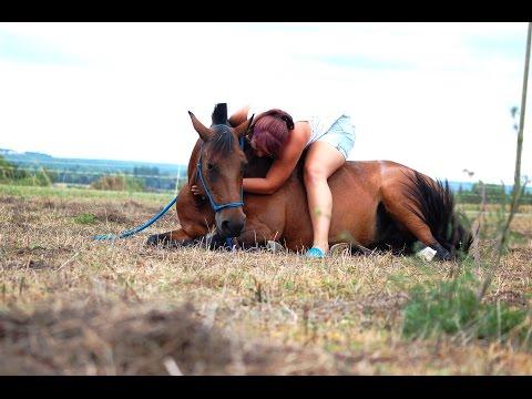 Comment apprendre le couché à son cheval ?