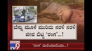 'Rowdy Ranga' Elephant Dies After Being Hit By a Bus in Madikeri
