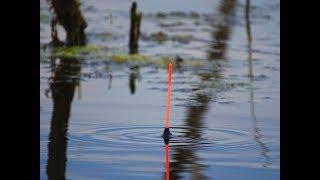Ловля карася в июне. Рыбалка с лодки на маховую удочку.