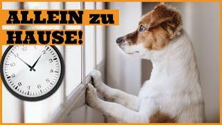 Wie lange kann ein Hund alleine bleiben I Trennungsstress bei Hunden erkennen und vermeiden