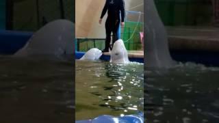 Дельфинарии Тюмени