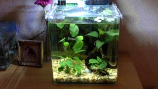 Small Or Nano Aquariums:  Betta, Guppies, & Adf