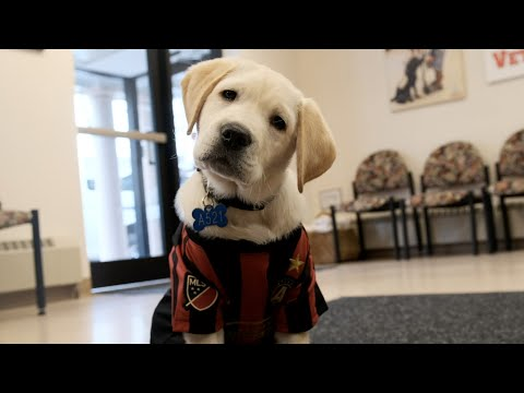 Spike the ATL UTD pup forges new partnership with America's Vet Dogs