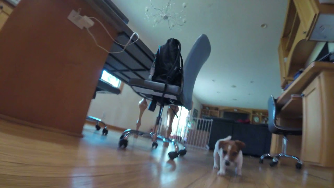 brentwpeterson: Finn Running https://t.co/eIE0BqbR6M via @YouTubennAfter a hard week at the #AdobeSummit this is worth 30 seconds