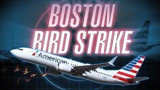 American 737 MAX 8 Bird Strike Departing Boston Logan [with ATC audio]