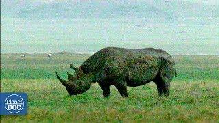Ngorongoro Wildlife. Tanzania - Part 1