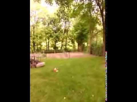 Dog Hops Like A Rabbit