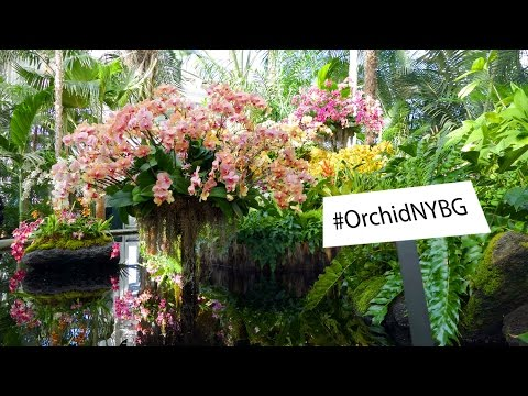 The Orchid Show: Thailand (03-19-2017)