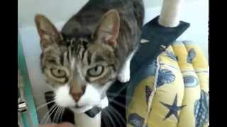 Cat wants petting / Chat qui veut des caresses