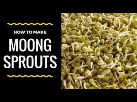 How to sprout lentils at home/How to sprout lentils recipe/Chana and Moong Sprouts
