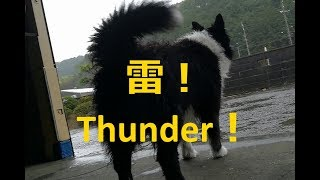 雷に敵意むき出しの我が家の愛犬ハリーくんです。雷・花火など空から音...
