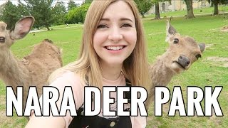 Must Visit DEER PARK in Japan!