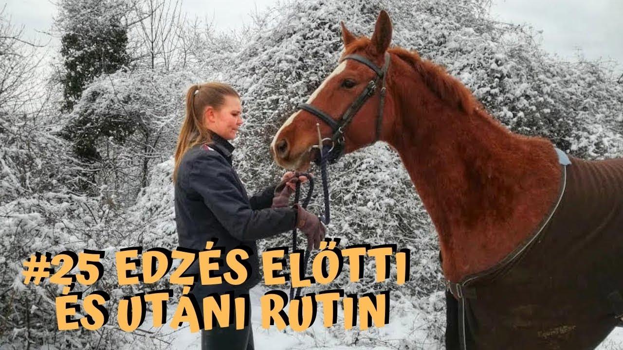 Közös kenőcs lovak számára - tarczi.hu
