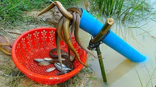 Amazing Fishing | Unique Fish Trapping System | PVC Pipe With Plastic Bottle Fish Trap