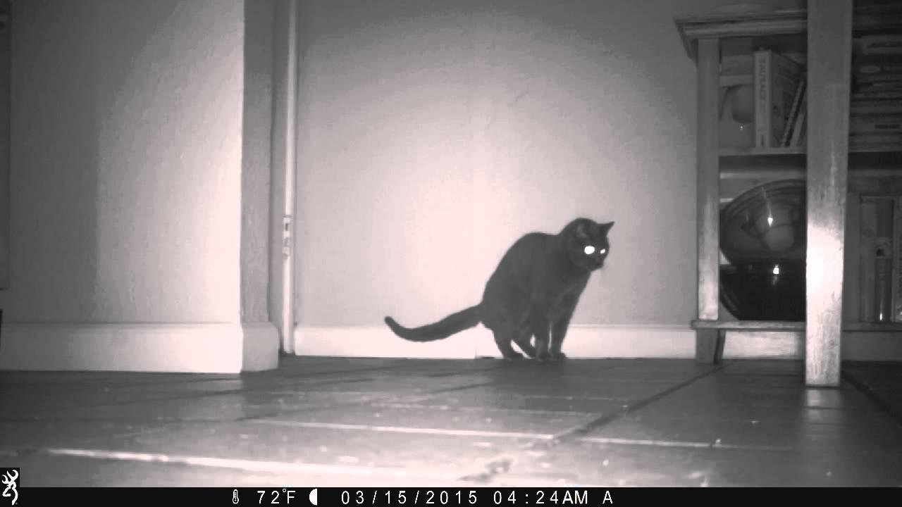 Grey Cat Took A Poop On My Kitchen Floor.