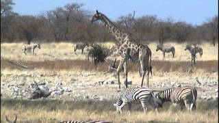 Namibie, Botswana, Zimbabwe en 2009