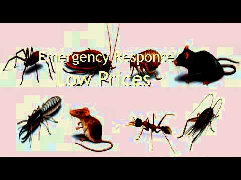 Organic Pest Control Colorado Springs Co How To Kill Bed Bugs At Home