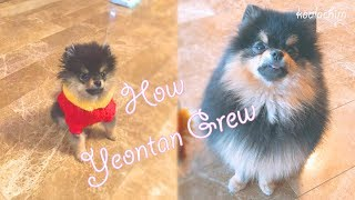 BTS: How Yeontan Grew