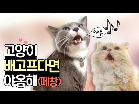 {떼창} 고양이 배고프다면 야옹해 (하악주의) | 김메주와고양이들