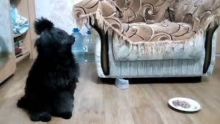 Реакция собаки на тренировки Антуана Наджарян