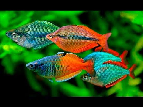 Топ 10 самых красивых морской аквариум рыб