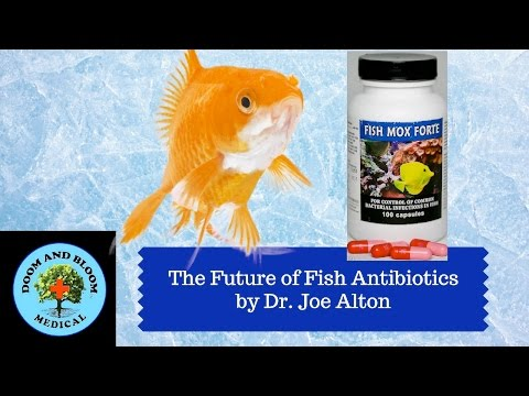 The Future Of Fish Antibiotics In Survival Medicine