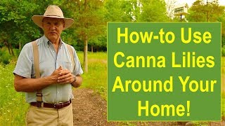 PSL Landscaping Tips & Ideas: How-to Use Canna Lilies to Soften the Corners of Your Home